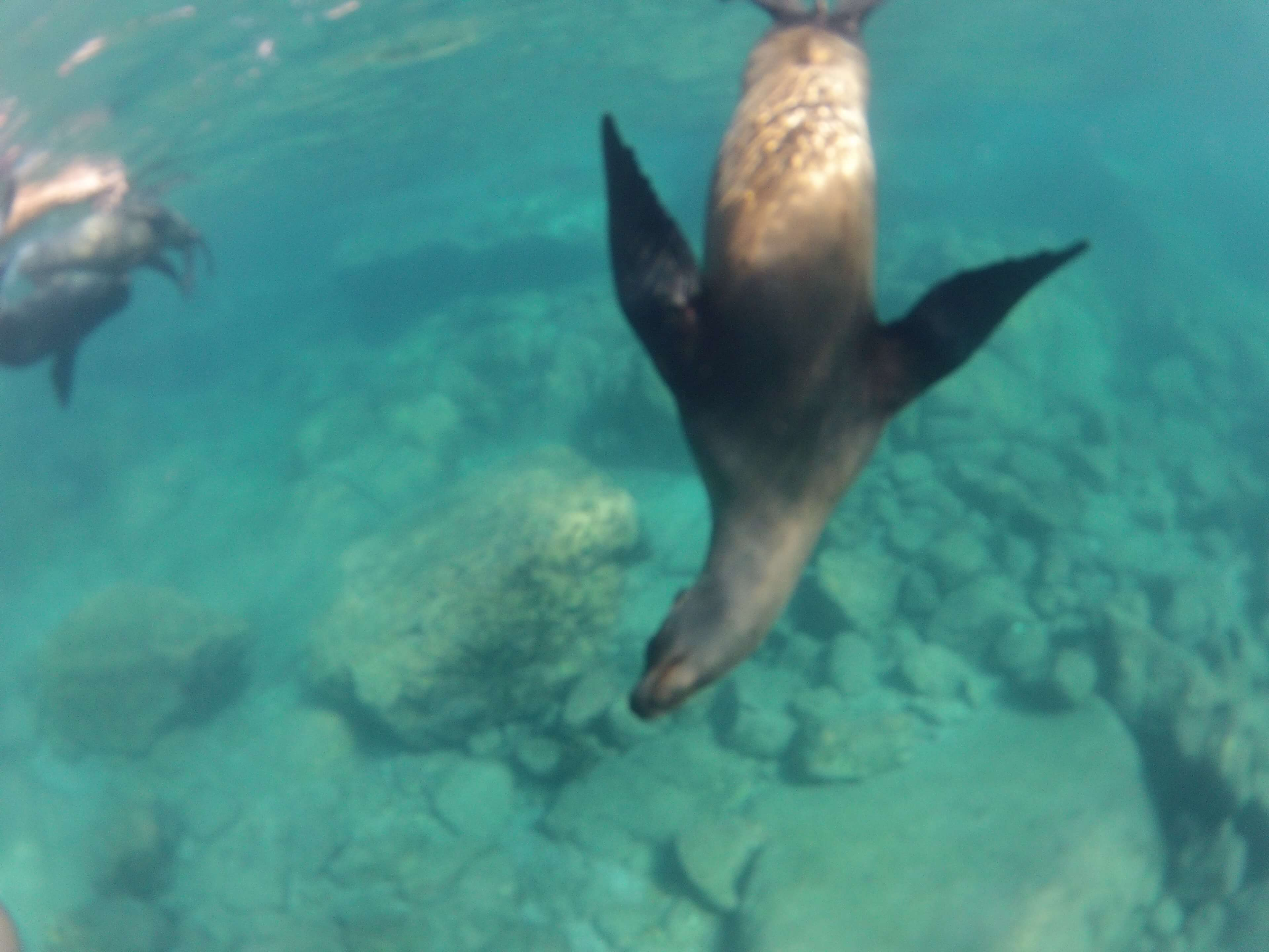 Swimming with Wild Sea Lions in Mexico